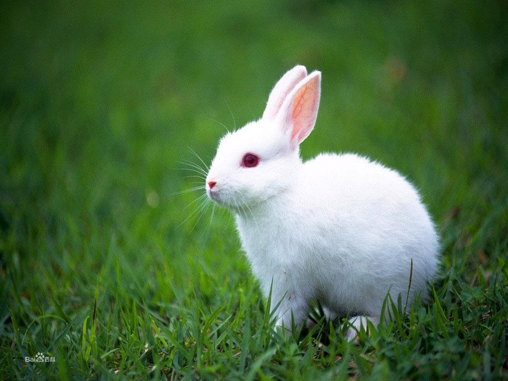 动物壁纸兔子1024_768交警抓小海豚电动车图片