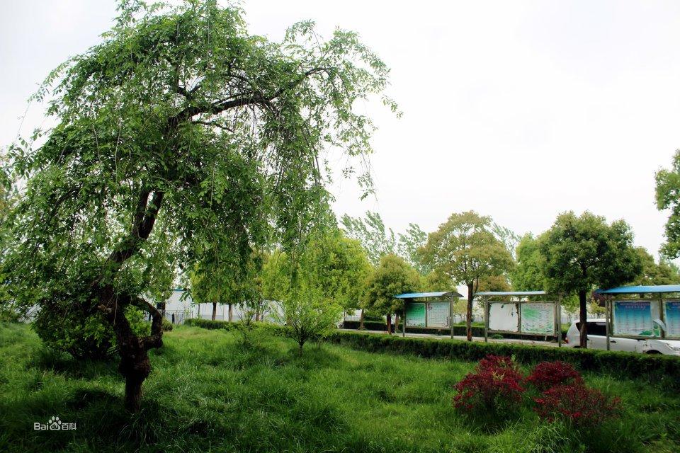三中校園風景