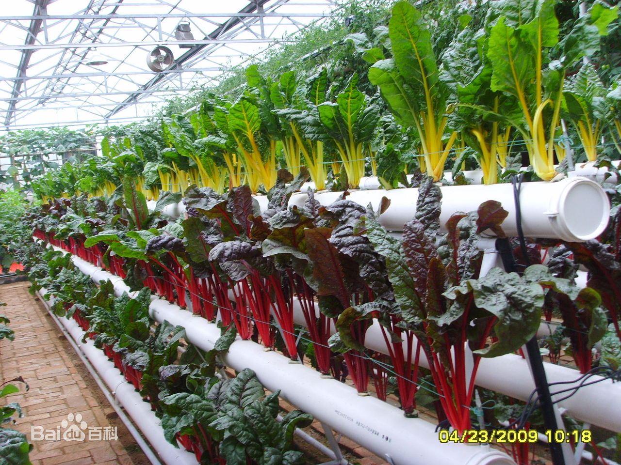 蔬菜无土栽培新技术图片 高清图片