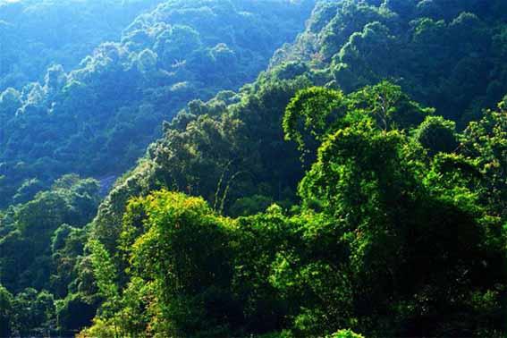 广东王子山森林公园图片