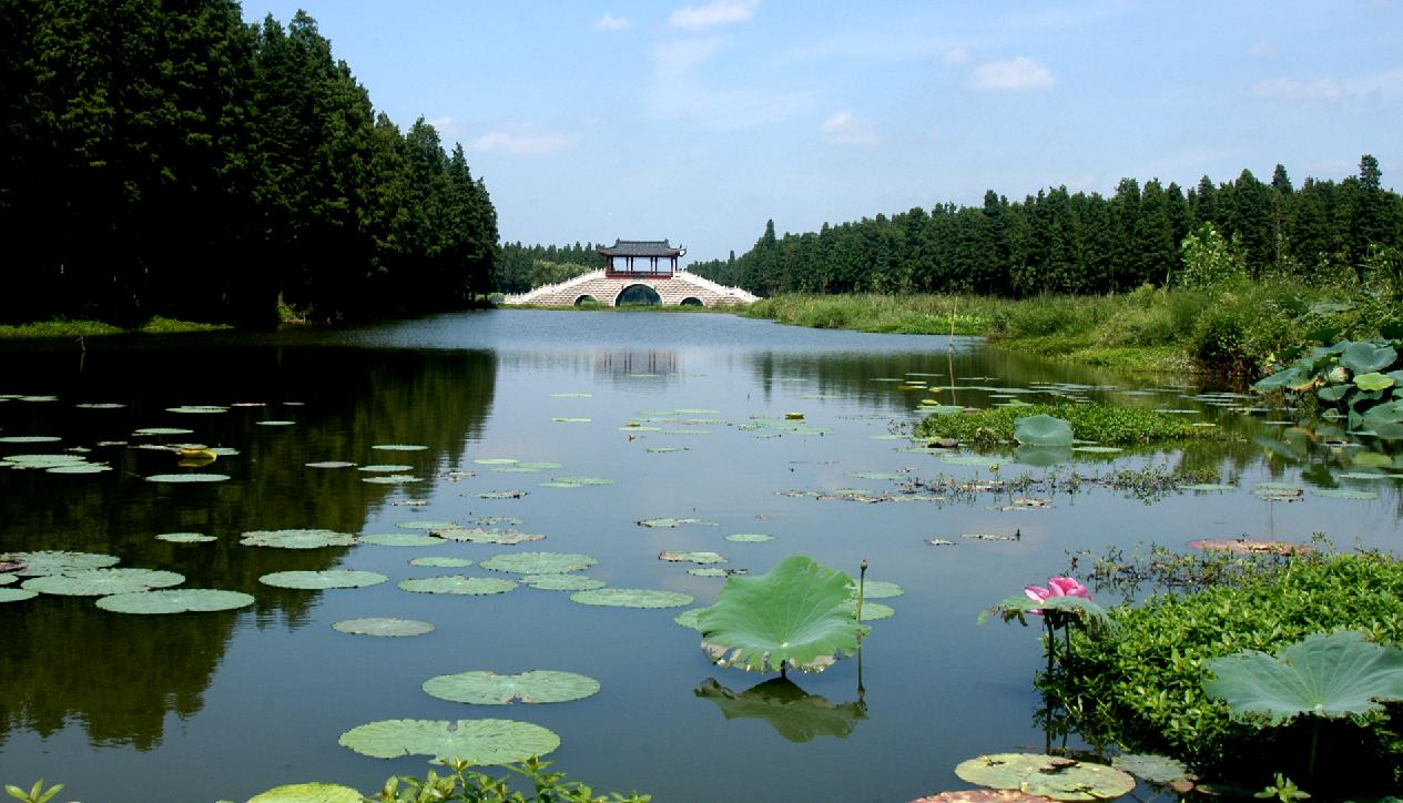 大的人工湿地森林生态系统图片