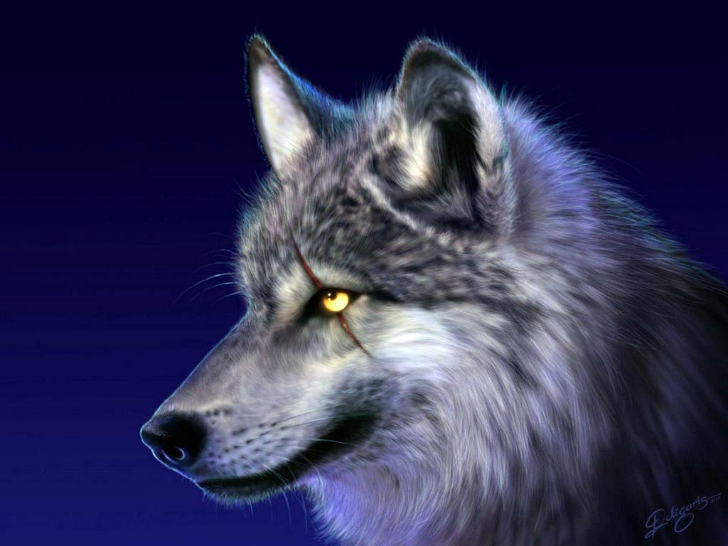 草原狼的图片 高清图片