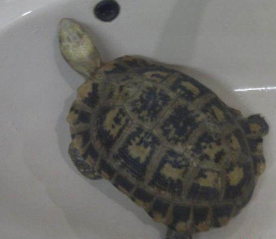 海洋甲壳动物--龟图片