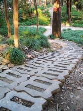 衡山公园风景照