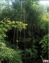 亚热带雨林