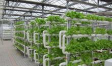 温室无土栽培-管道栽培,墙体栽培实例