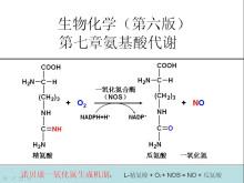 一氧化氮合成机制