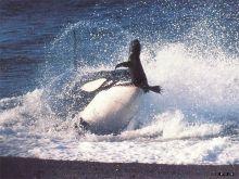 巴基斯坦古鲸