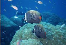 海洋生物大百科8