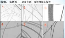 腈纶在显微镜下观察的几种形态。