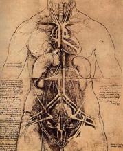 达·芬奇生理解剖图