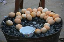 常见烤鸡蛋照片