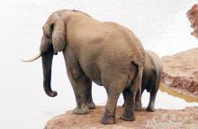 阿多大象国家公园照片