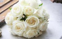 切花玫瑰实为月季