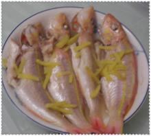 红衫鱼的各种图片