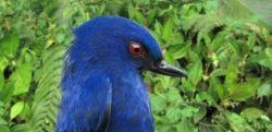 靛青刺花鸟