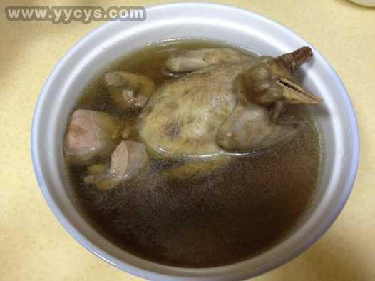 鸽子乳鸽猪腰汤灵芝怎么带脚环视频图片