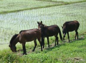 驴骡和马配种
