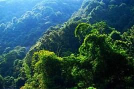 王子山森林公园门票_广东王子山森林公园
