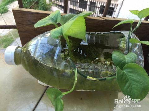 如何用矿泉水瓶做花盆图片