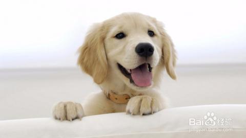 周岁之内的狗狗可以经常洗澡吗_跳蚤根源大多数来自宠物身上,尤其是狗,所以我们要经常给它洗澡.