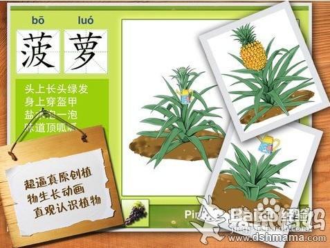 原创植物生长动画介绍,让宝宝在娱乐的同时直观认识水果的生长过程.图片