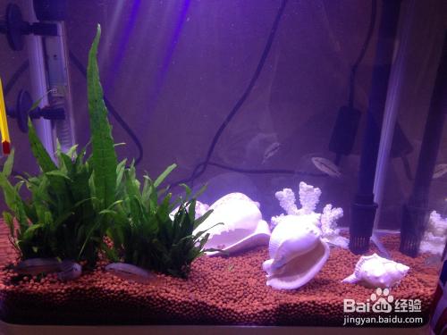 家中养观赏鱼的注意事项