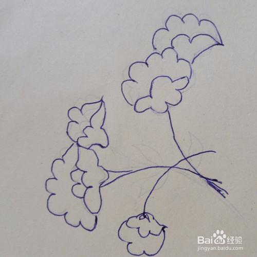 儿童简笔画鸡冠花