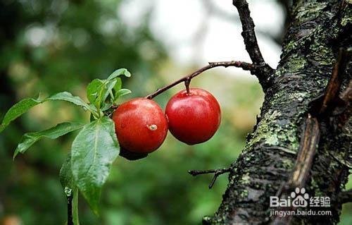 韶关旅游特产美食一览表