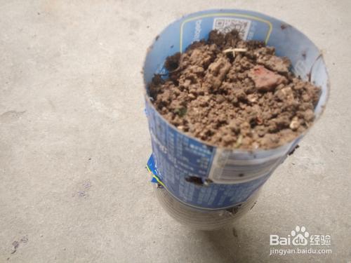 4 把填装好的土养的矿泉水瓶,瓶盖扭开,瓶盖不要,用之前剪下来的矿泉图片