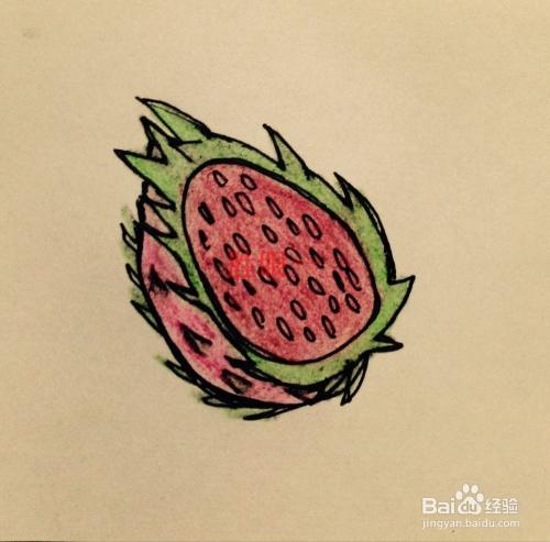 怎样画各种不同角度的火龙果呢?图片