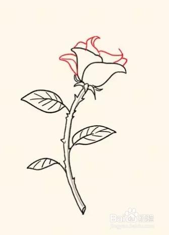 铅笔画玫瑰花的步骤 画玫瑰花的步骤图 美甲玫瑰花的画步骤 画玫瑰花图片