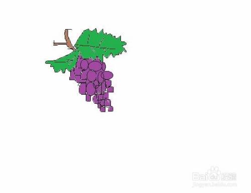 绿叶葡萄手绘画法图片