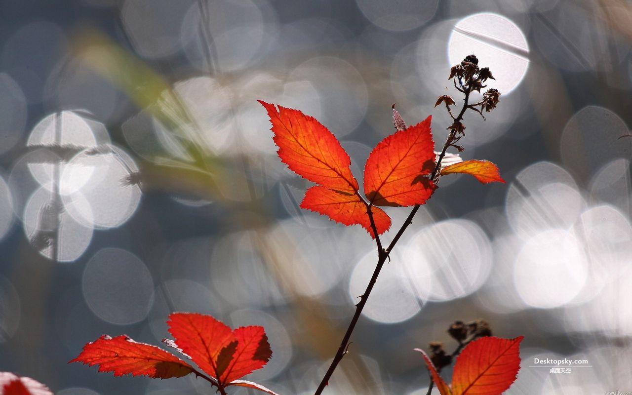 田园风景动态壁纸,3d风景动态壁纸桌面,山水花风景动态壁纸图片