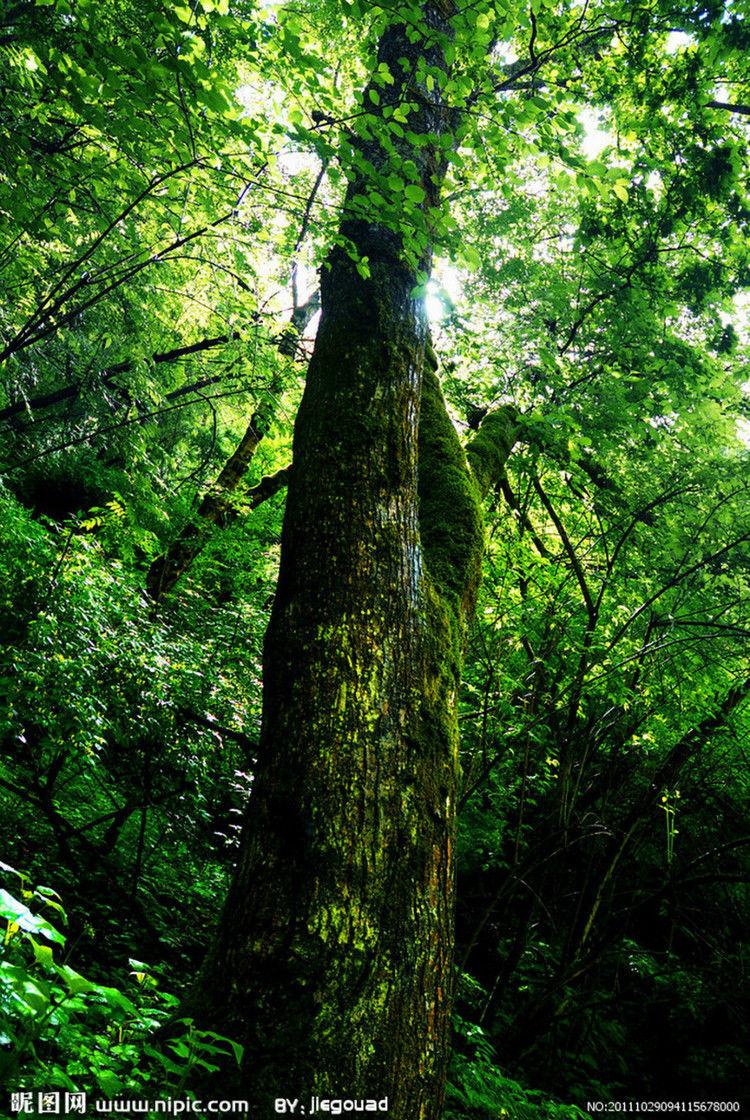 原始森林摄影图片图片