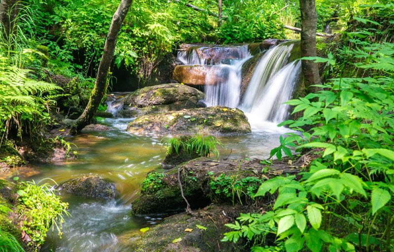 哈尔滨 清河原始森林公园_哈尔滨 清河原始森林公园_哈尔滨 清河原始图片