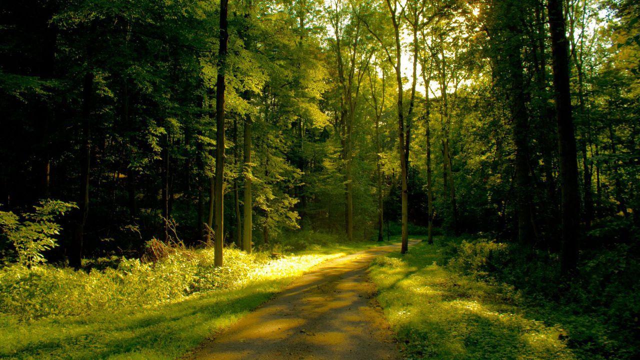 摄影树林__摄影树林__摄影树林图片