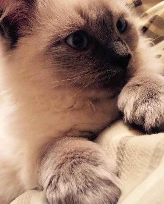 委屈巴巴表情包猫原图分享展示图片