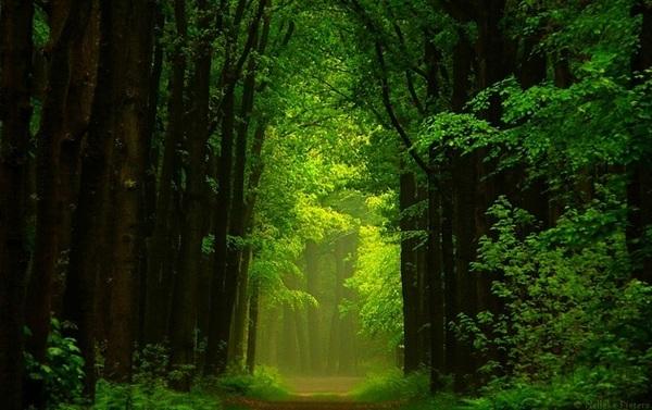 森林摄影图片