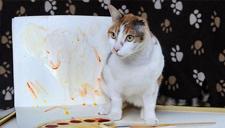 英国单耳猫咪现惊人艺术天赋 被赋猫界梵高