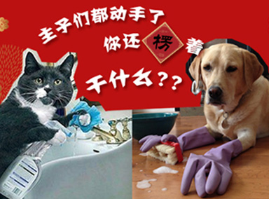 猫猫狗狗的新年大扫除