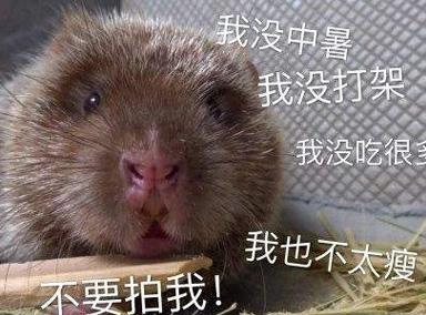 吃竹鼠的100个理由 连中暑都要被吃掉!