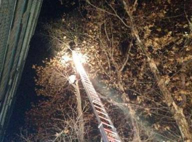 尴尬!男子救猫反被困15米高树