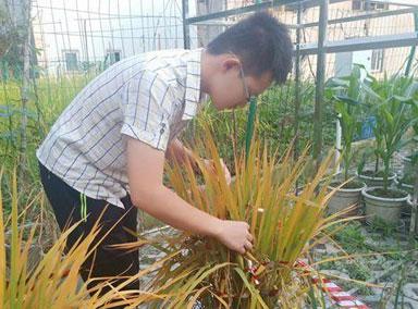 大二男生校园里种杂交水稻
