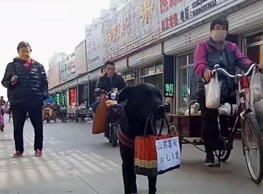 狗叼廣告牌為主人攬生意