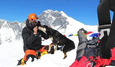 流浪狗登上喜马拉雅山7000米高峰