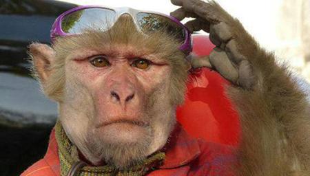 逗比宝宝猴子  好想拥有这么个小逗比猴纸