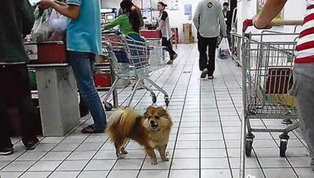 黑龙江:带狗进超市 态度挺无理