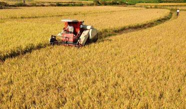 农业农村部回应要不要囤粮