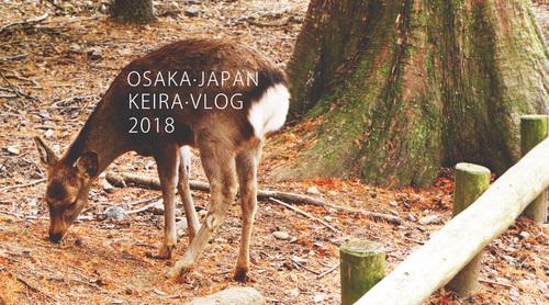 和我去遛弯儿—初遇大阪